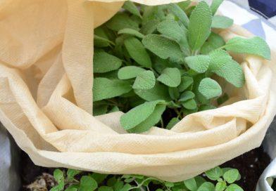 7 Tipps zum Pflanzen überwintern