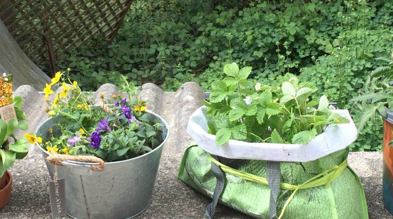 Der Garten in der Tasche Fanpage